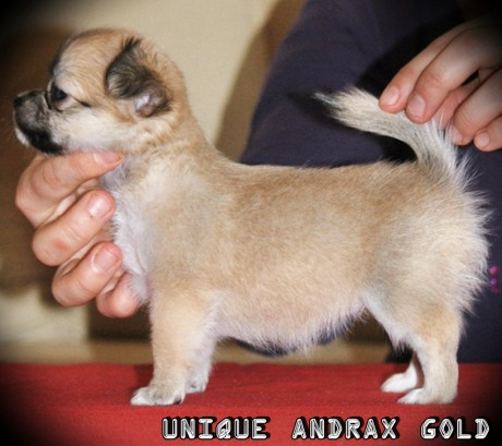 UNIQUE ANDRAX GOLD