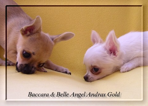 Baccara a Belle Angel Andrax Gold