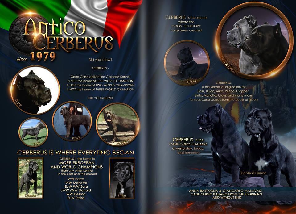 cerberus-adv-2-pagine.jpg