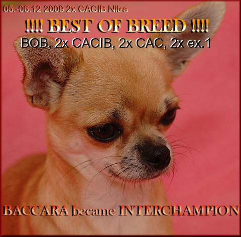BAki-interchampion.JPG